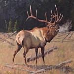 Elk At Morning Robert Betly Oil_websize_ $4500.00 - Copy