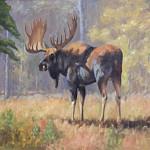 Moose In Aspens_ Oil_websize_Robert Betly  $4500.00