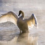 Morning Stretch_16 x 20_photography on canvas_(websize)_$125 (2)higher resolution