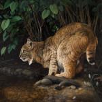 Serene-Splender 36 x 36 oil (W) $30,000_ Barbara Ivie Green