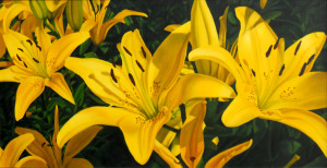 Consider the lilies_24 x 48 oil_ $2,500_lr (3)