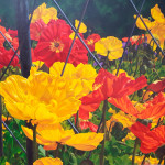 Spring Poppies_oil_ 36 x 48 _ $3,000_ lr (5)