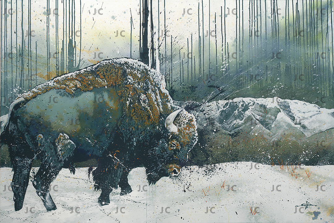 Bison in Snow_webrez_wm
